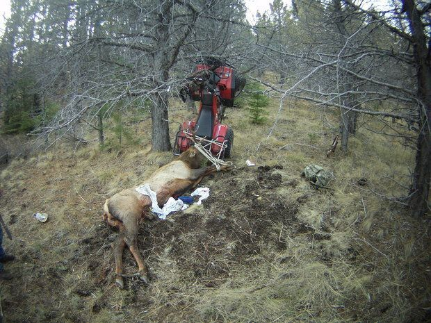 Man Kills Elk, Elk Impales Man Moments Later   Huffington Post