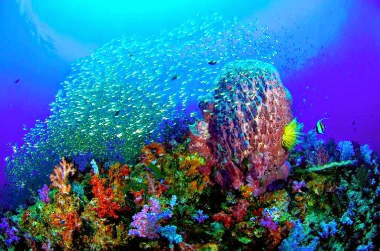 Night Flower: Океан - 3 - картини