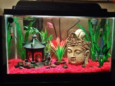 10g zen buddha theme creativity pinterest aquariums for Decoration zen aquarium