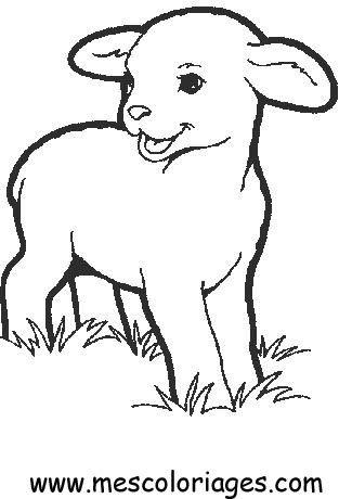 comment dessiner un agneau dessins Pinterest Color copies - copy coloring page of a tiger shark