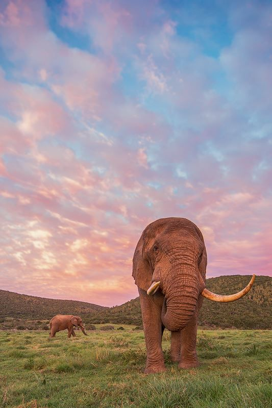 A stunning bull elephant photographed by Brendon Jennings at Kariega Game Reserve, South Africa, during a photosafari with Africa Geographic Travel