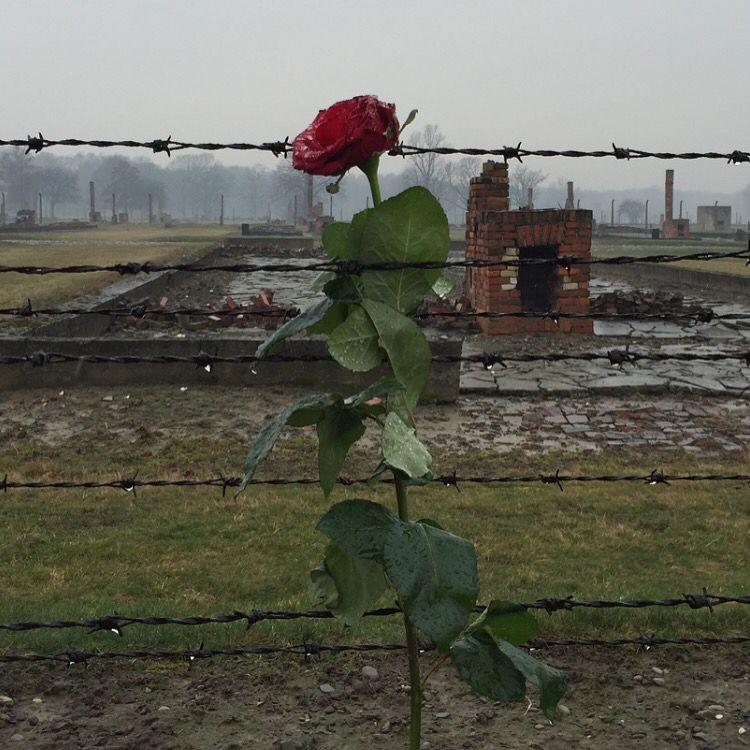 Birkenau never again