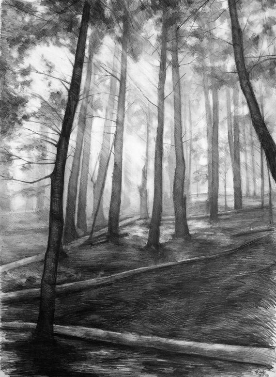 Dark Forest Original Drawing By Katarzyna Kmiecik Pencil Sketch Original Landscape Pine Tr Pine Tree Drawing Landscape Pencil Drawings Tree Drawings Pencil