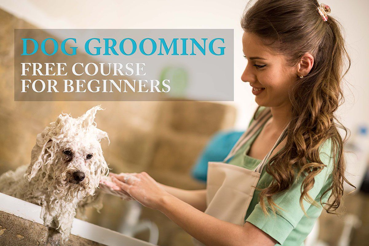 Dog Grooming Huge Free Guide For Beginners Dog Grooming