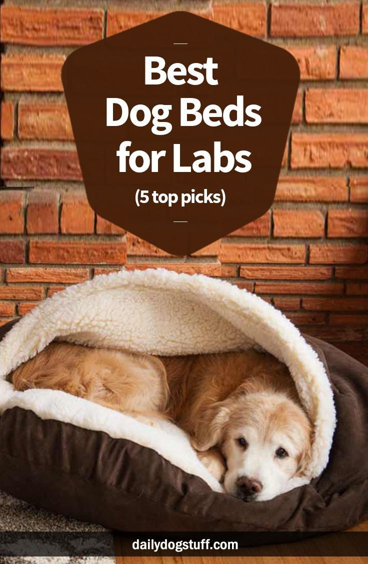 Best Dog Beds for Labs (5 top picks) Cool dog beds, Cute