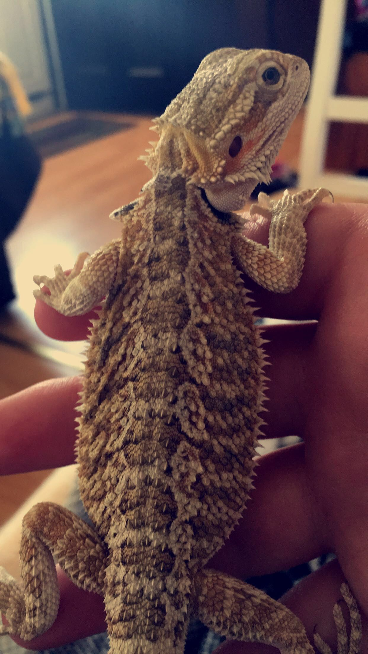 Look at these beautiful colors and patterns ️ beardie