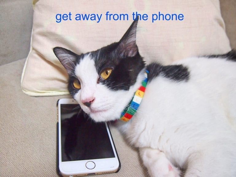 100 Dank Cat Memes Ever That Will Make You Rock n Roll