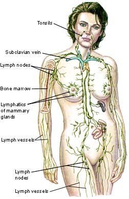 Lymphatic Drainage
