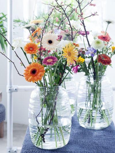 le gerbera projets essayer fleurs planter des fleurs et bouquet de fleurs. Black Bedroom Furniture Sets. Home Design Ideas
