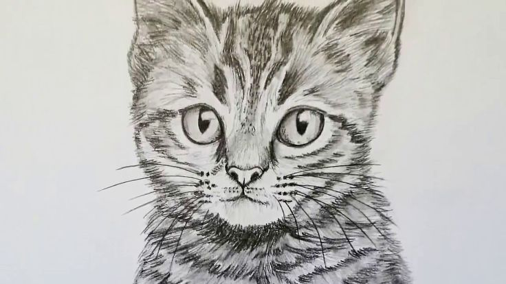 Katze Zeichnen Lernen Fur Anfanger Tiere Zeichnen Malen Anfanger Fur Katze Lernen Malen Tiere Zeich Animal Drawings Drawing For Beginners Drawings