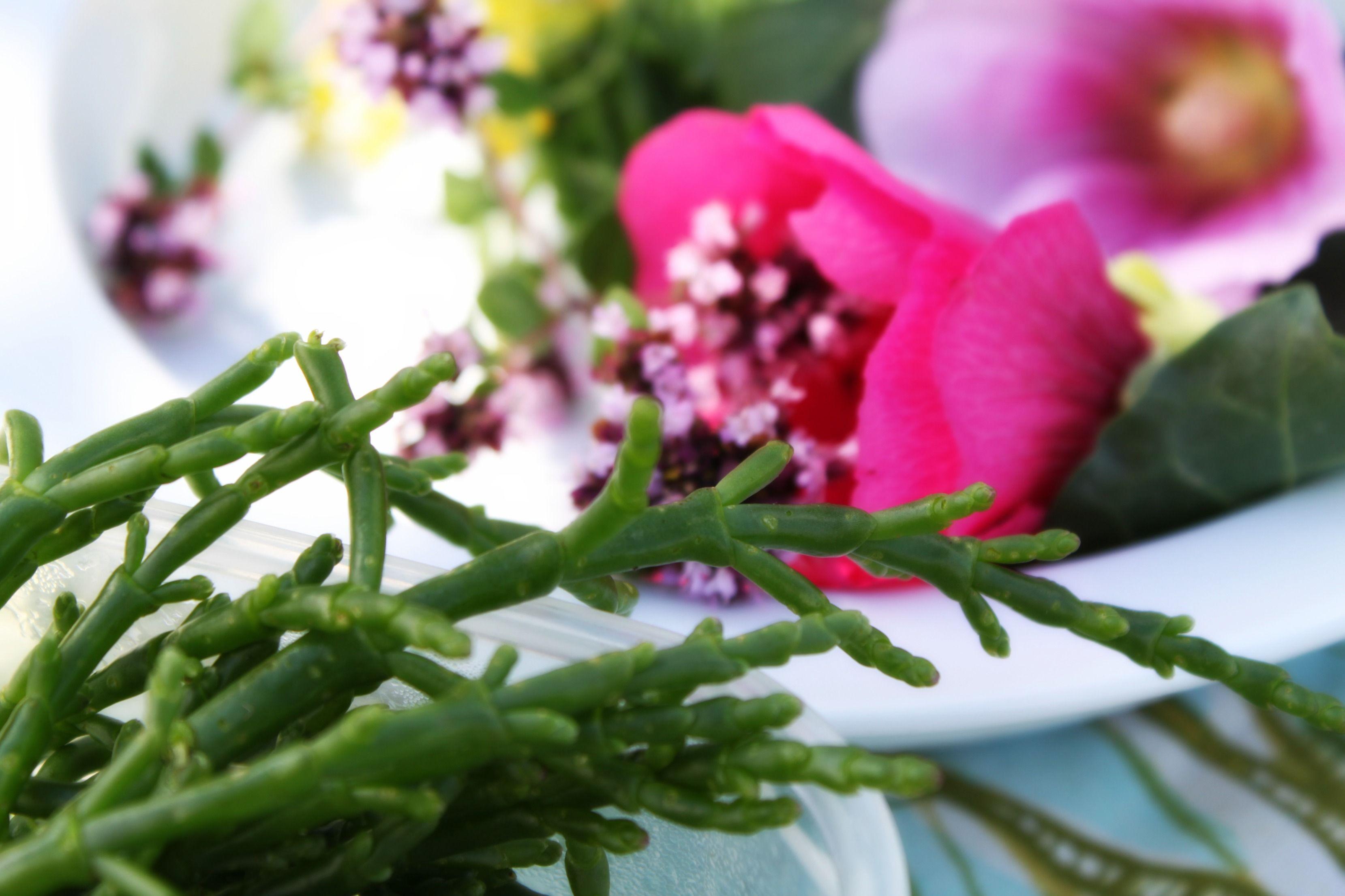#Saveurs #Salicorne #Fleurs #Nature #RochefortOcean Charente Maritime Poitou Charentes