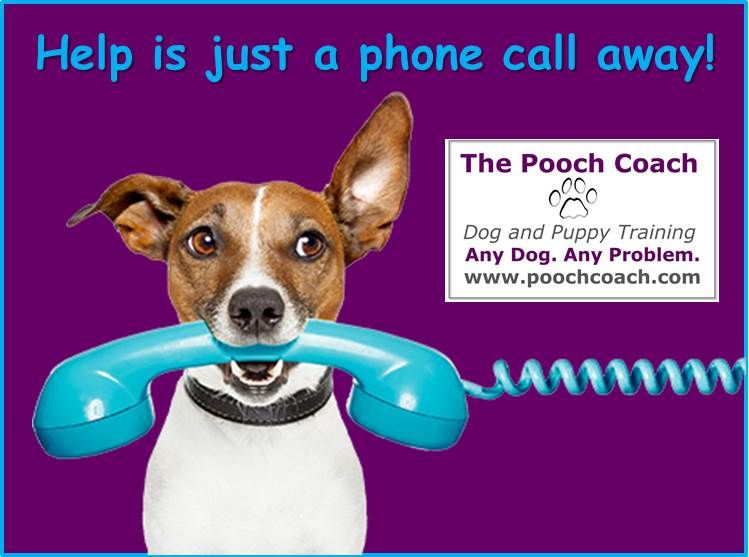 Announcing Phone Consults Now The Pooch Coach Can Help You