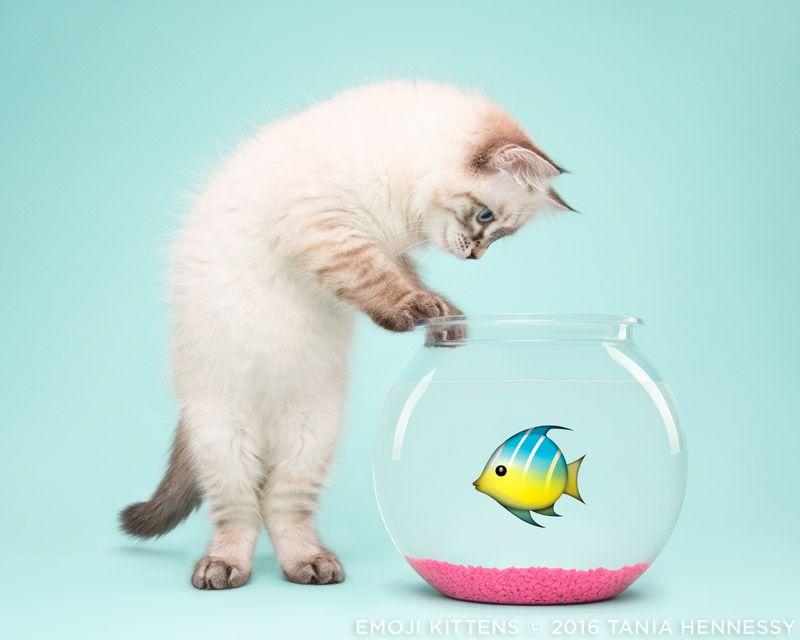 Emoji Kittens by Tania Hennessy