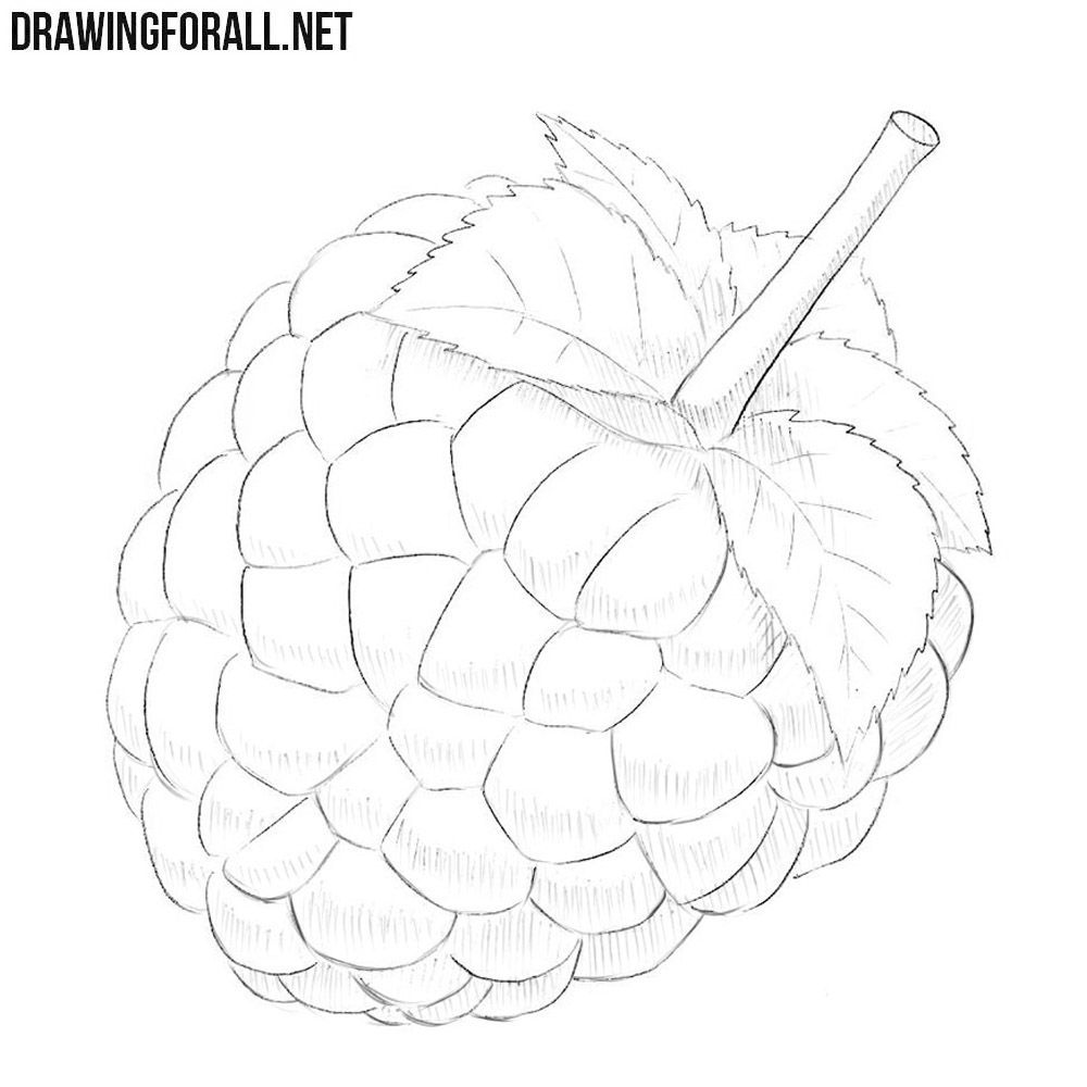 How To Draw A Raspberry Drawings Flower Drawing Botanical Line Drawing