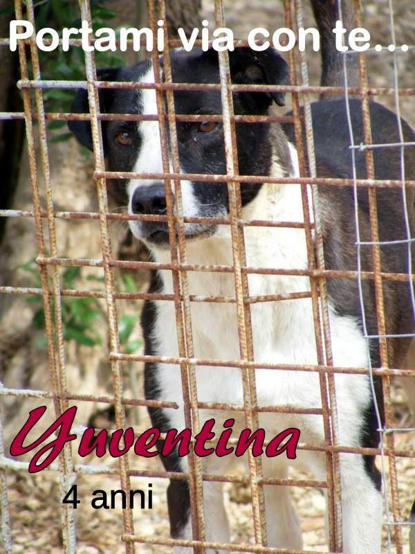 Yuventina - 4 anni #portamiviaconte