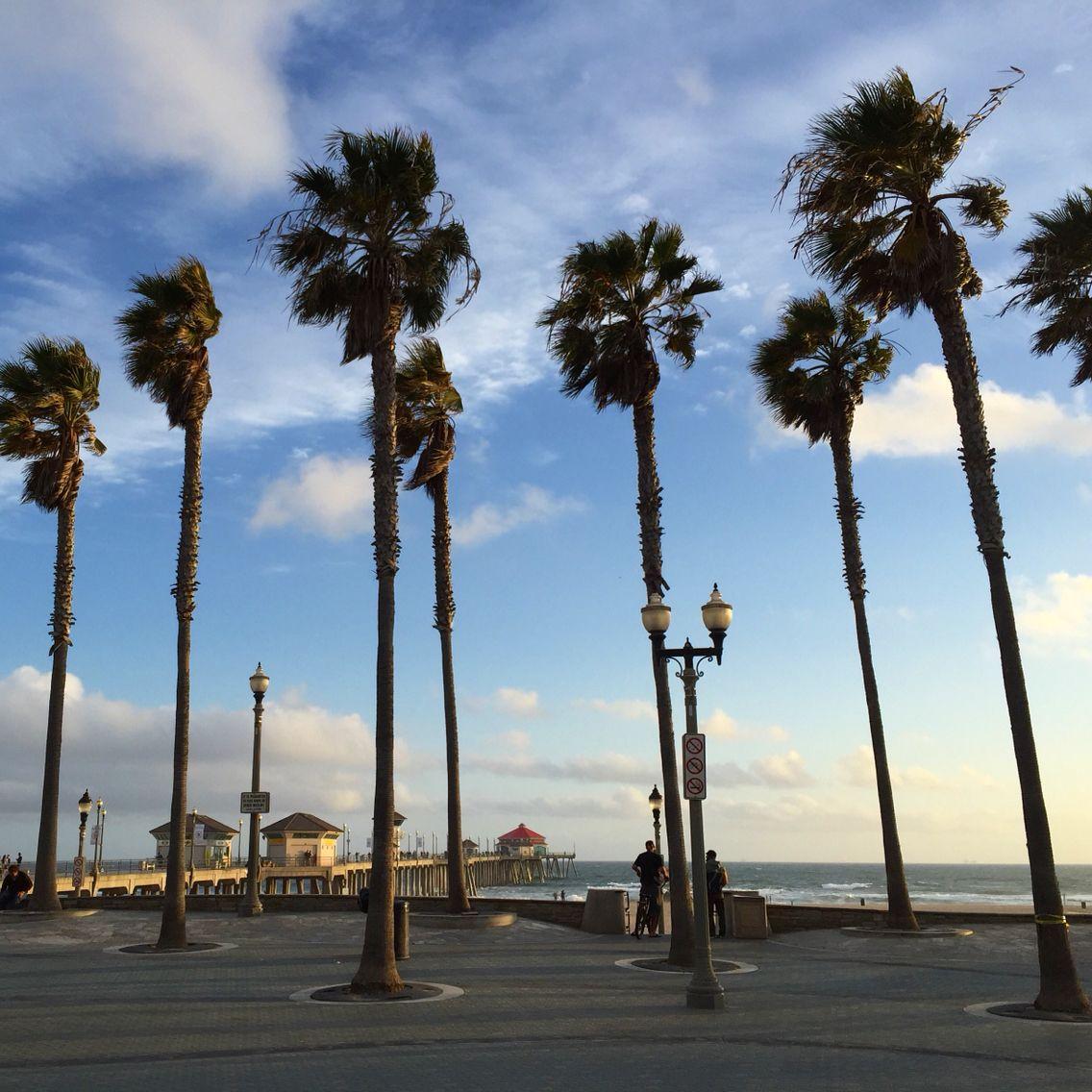Palm Tree Beach: Huntington Beach Palm Trees
