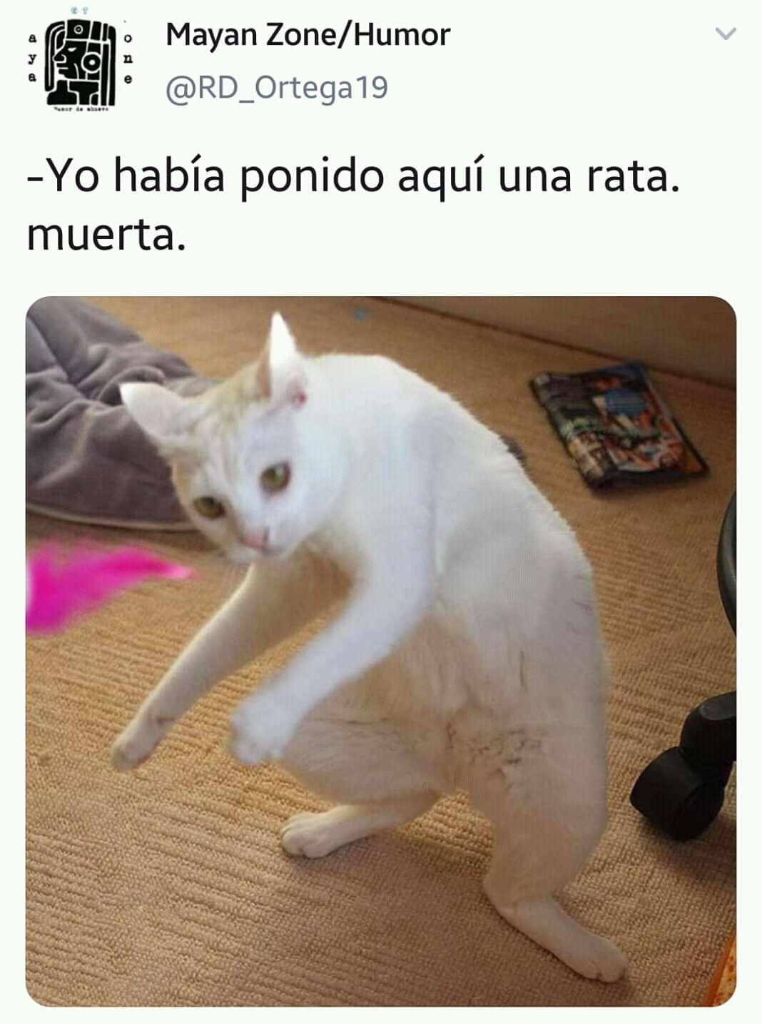 Meme Del Gato Blanco Yo Habia Ponido