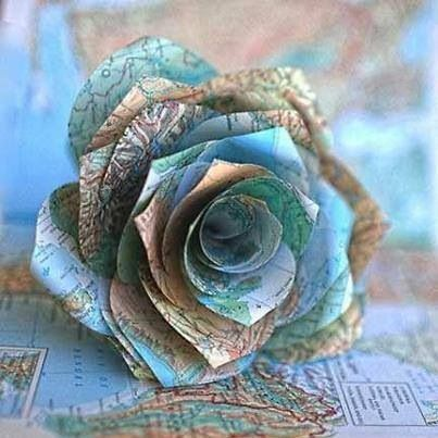 A map rose
