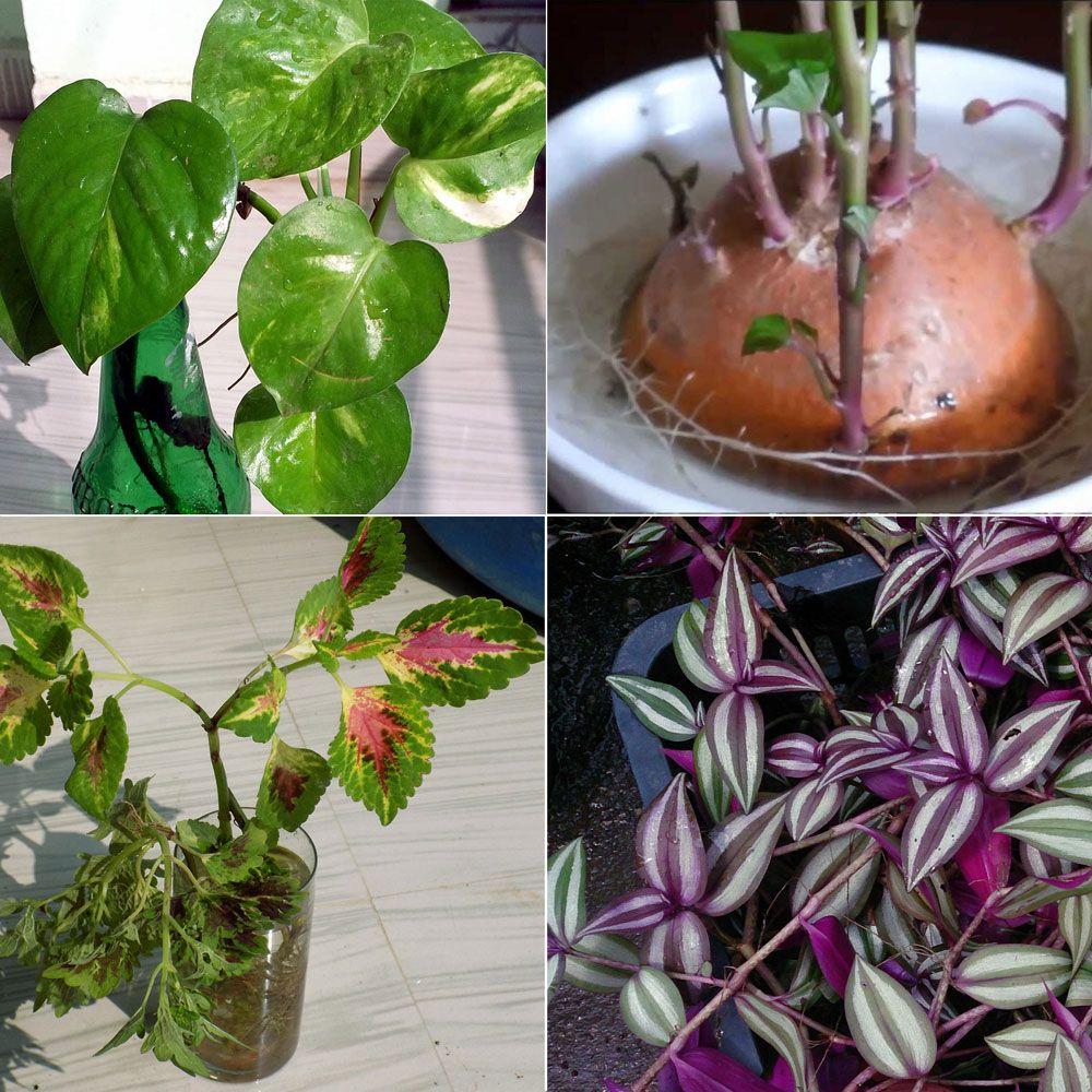 8 Best Indoor Plant Grow In Water Growing Plants Indoors 400 x 300