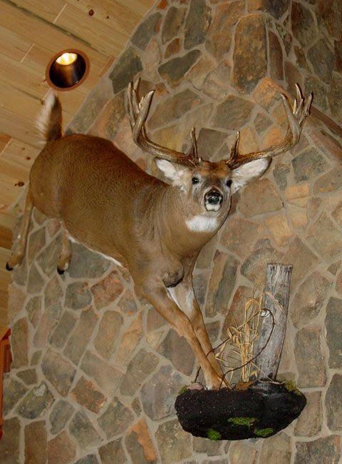 Wall Mount Taxidermy Taxidermy Display Deer Mounts