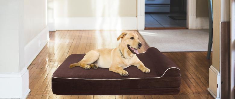 xxl dog beds dog beds dog collars dog toys cat beds dog