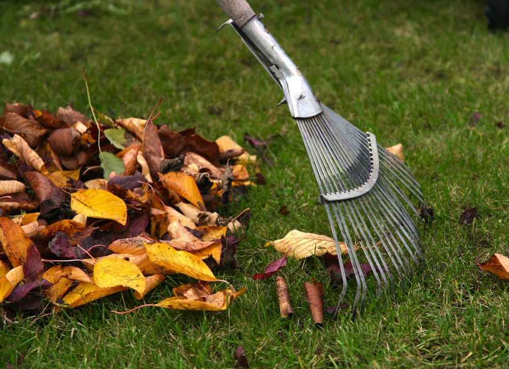 9 Tricks For Fast And Easy Fall Yard Cleanup Yard Cleanup Lawn