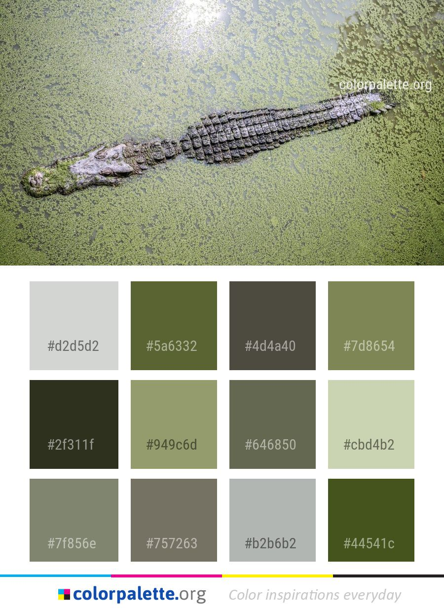 Crocodilia crocodile fauna color palette colors inspiration graphics design inspiration