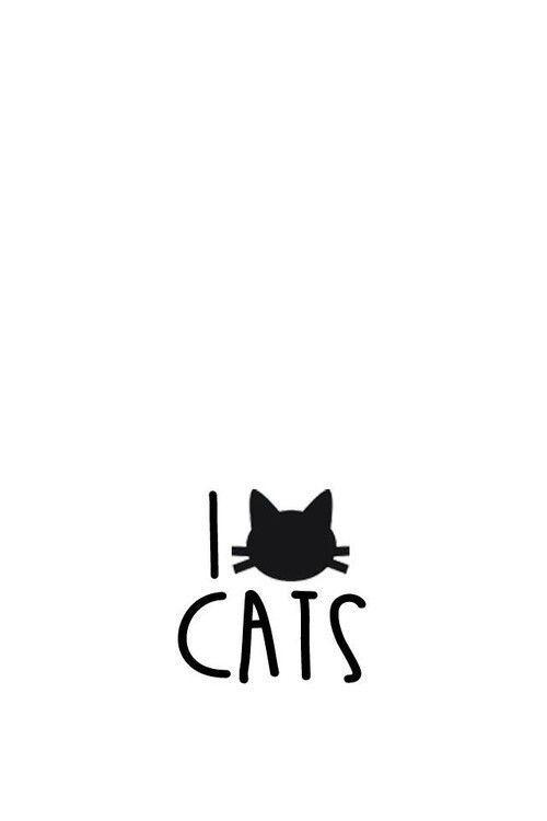 Cute Cats Wallpapers Wallpaper