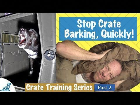 How to Get Your Dog to Stop Barking at Night Time (With
