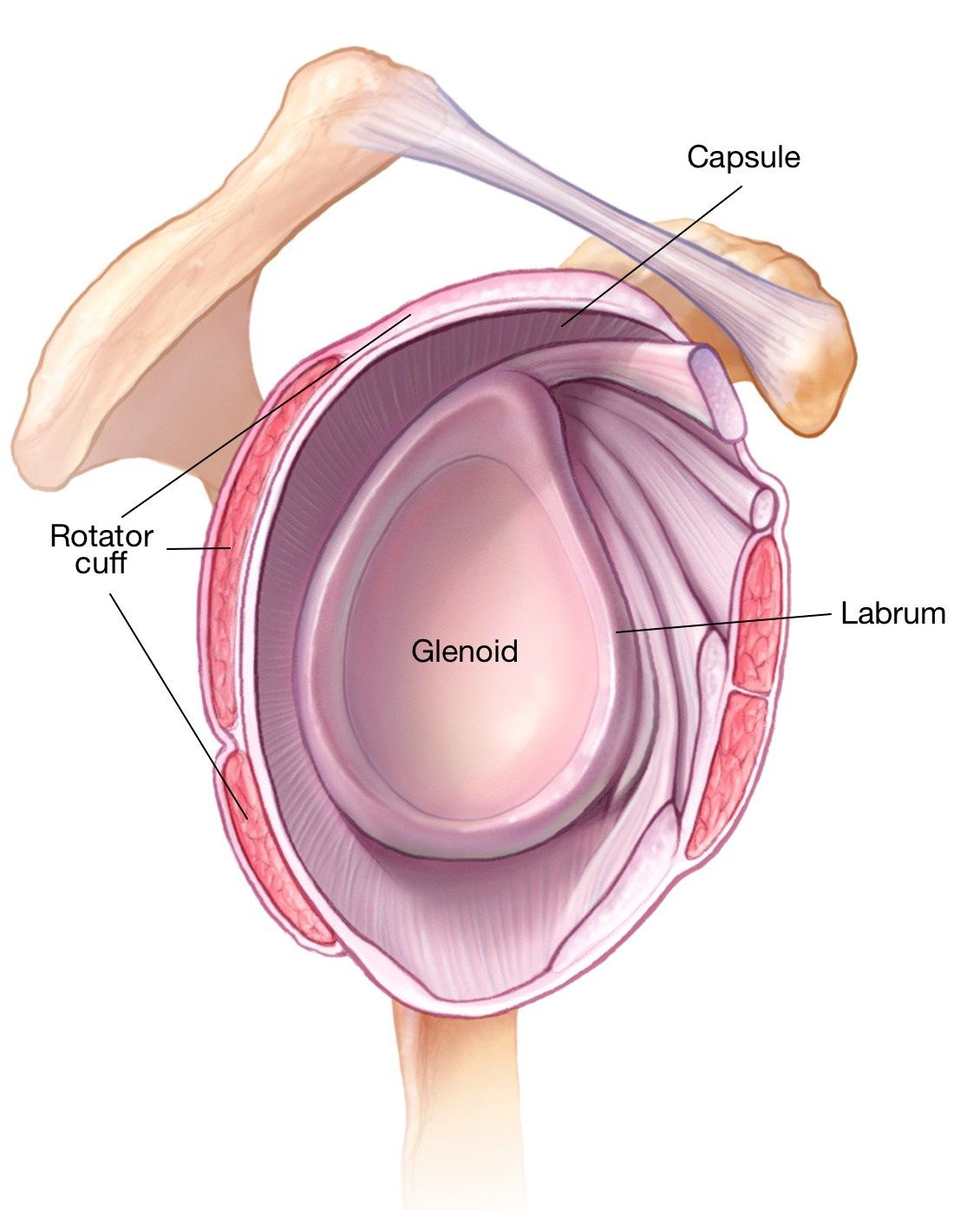 Torn Labrum Of The Shoulder  Causes  Symptoms  Treatment