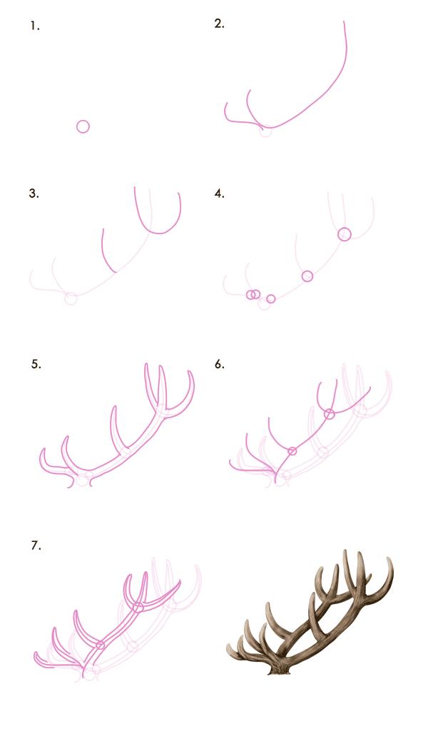 Drawingdeer 7 1 Red Deer Antlers Drawings In 2018 Pinterest