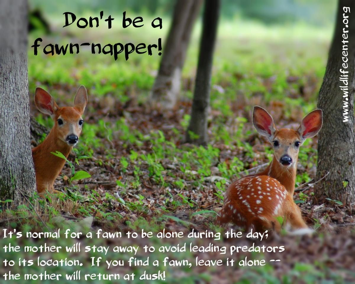 Check this page on VA Wildlife Center's site for the info