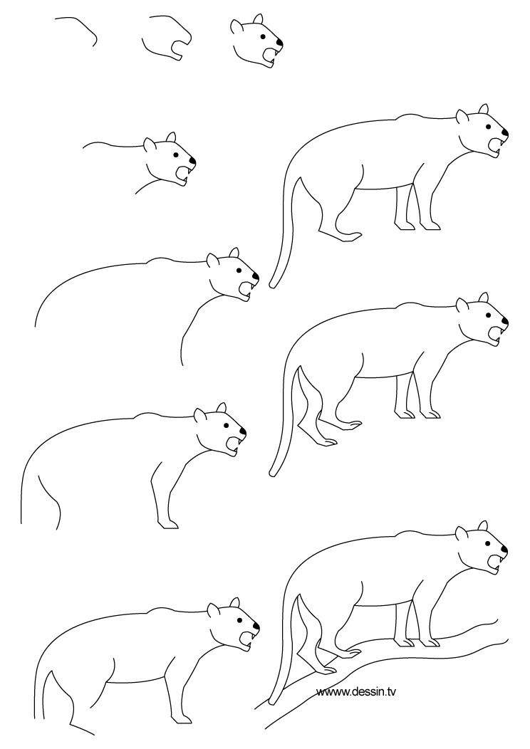 Step By Step Drawing Animals Learn How To Draw A Panther With Simple Step By Step Instructions Dessins Faciles Pour Les Enfants Dessin Facile Animaux Dessin