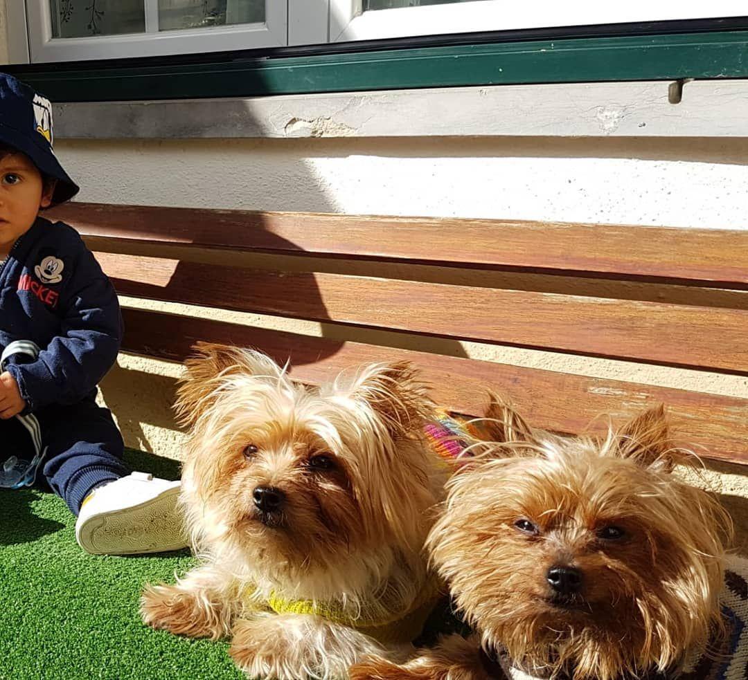 Waitting for summer with @bebe_a_mae_vai_ja  #oscar_and_the_gang #yorkshireterrier #yorkie #yorkiesofinstagram... #dog #dogsofinstagram #dogs #puppy #dogstagram #instadog #pet #doglover #love #dogoftheday #cute #doglovers #instagram #pets #of #puppylove #doggo #puppies #cat #doglife #puppiesofinstagram #ilovemydog #dogsofinsta #animals #hund #doggy #petstagram #k #animal