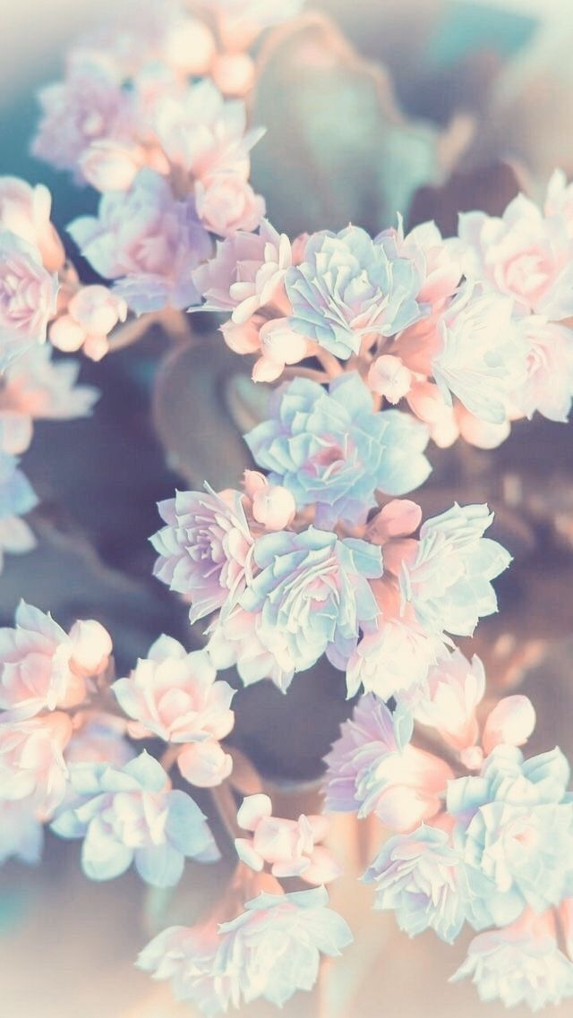 Floral Flower Wallpapers Iphone Android Pink Flowers Wallpaper Flower Wallpaper Iphone Background