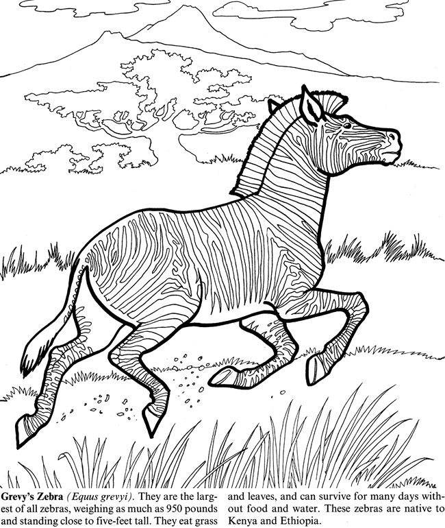 Endangered Animals By Jan Sovak Coloring Page 2 Welcome To Dover Publications Coloring Pages Dover Coloring Pages Endangered Animals