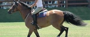 Horseback Riding & Balance Ball Exercises | LIVESTRONG.COM