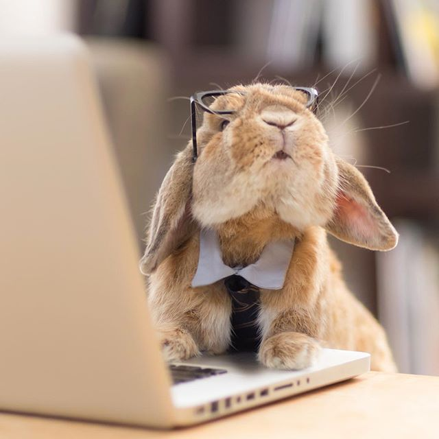 организациях прикольные открытки кролики работаем лучших