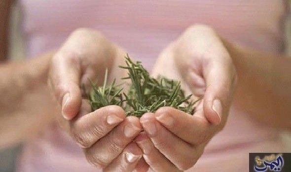 ما هي فوائد الروزماري أو إكليل الجبل Healing Recipes Rosemary Natural Medicine