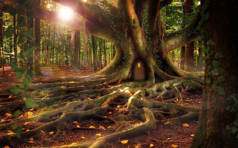 приятному картинки красивый волшебный лес поклонников, владельцев украшений