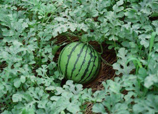 Tarbeaed Vegetable Garden