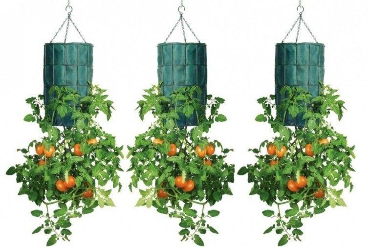 C mo cultivar tomates al rev s en botellas de pl stico for Plantas decorativas de plastico