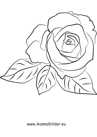 Ausmalbild Rosenblute Zum Ausmalen Ausmalbilder Malvorlagen Kindergarten Blumen Rosenblute Ausmalbilder Ausmalen Rosen Tattoo Umriss