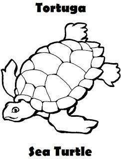 Animales Marinos Para Colorear Tortuga Sea Turtle Preescolar