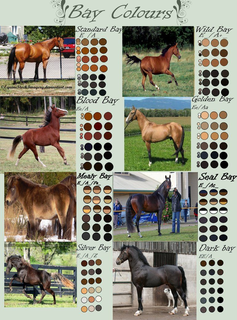 Variations of the bay color in horses - gorgeous!
