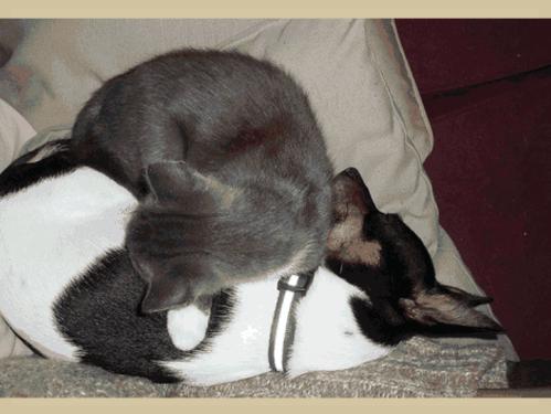 Belles images d'amitié entre animaux