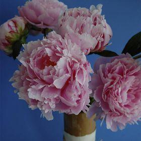 How To Grow Peonies With Images Growing Peonies Peonies Flowers