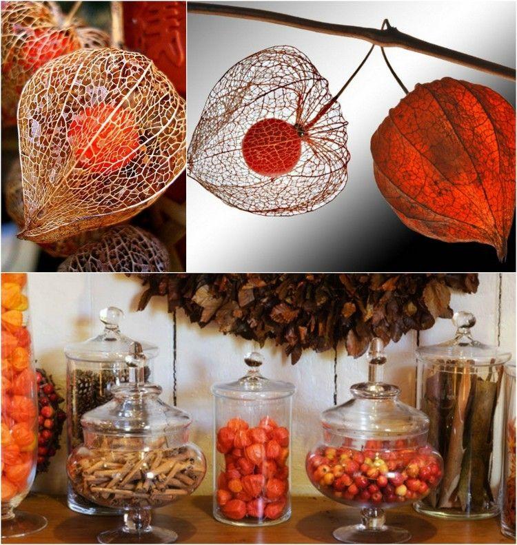 lampionblume physalis von der herbstdeko nicht wegzudenken kreativ autumn fall decor und decor. Black Bedroom Furniture Sets. Home Design Ideas