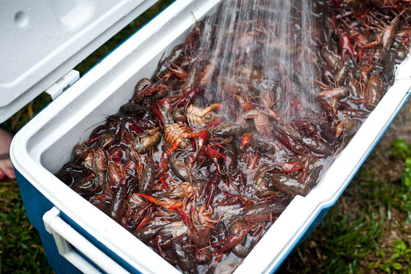 How to Host a Crawfish Boil Kelly Neil Crawfish boil