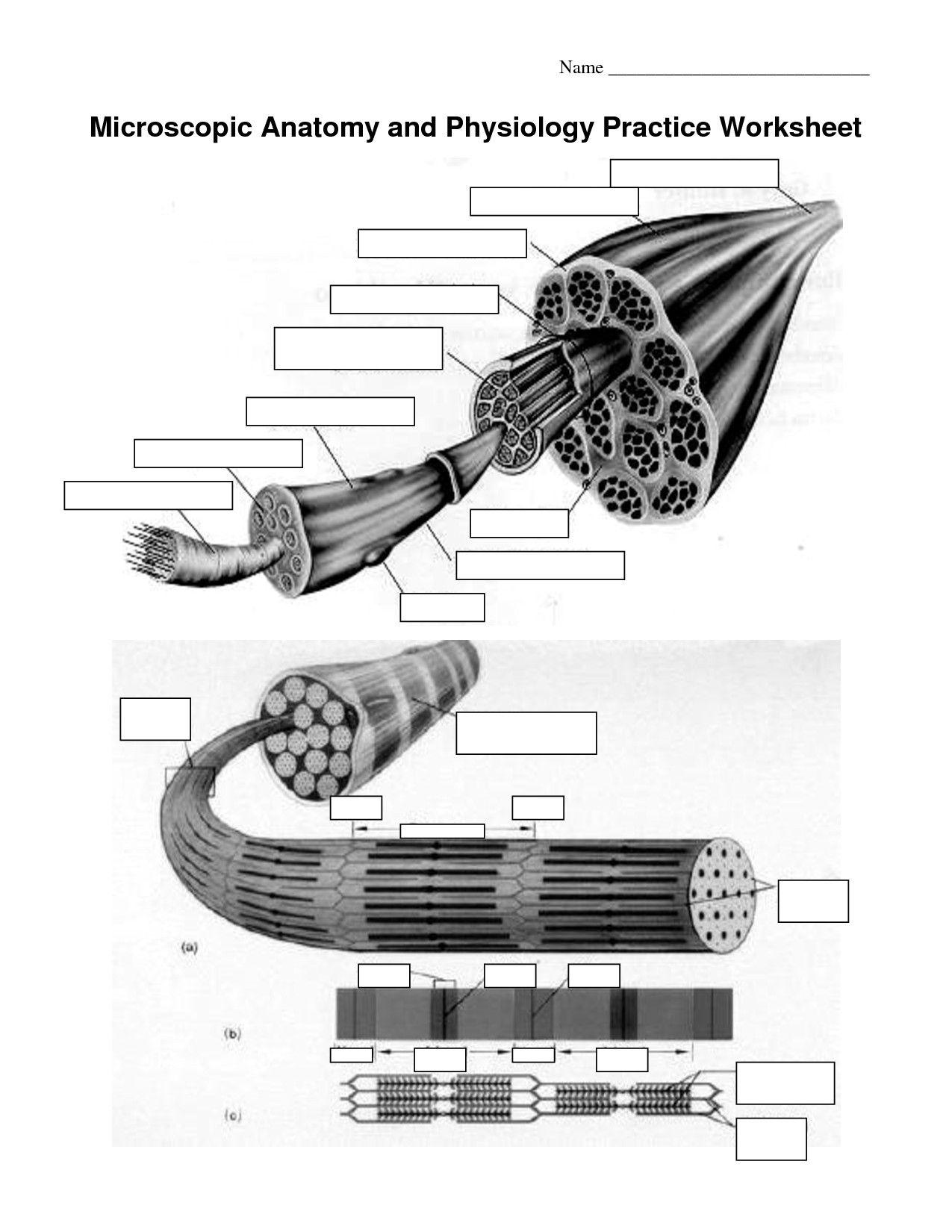 Printable Anatomy Worksheets In